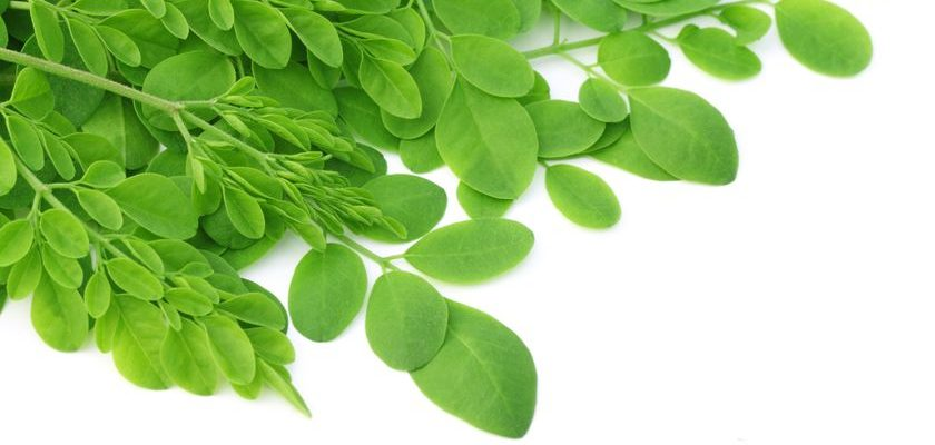 Moringa, un superaliment