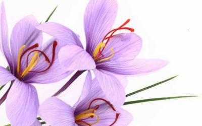 Select Botanical, fournisseur traditionnel de plantes