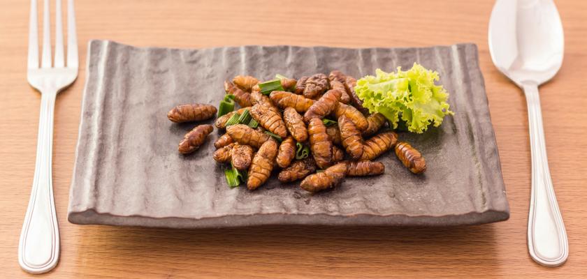 Les insectes, une alternative alimentaire et écologique ?
